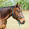 horsesofwedgfield-1278
