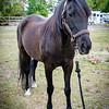 horsesofwedgfield-1012