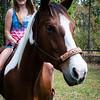 horsesofwedgfield-0743