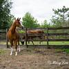 horsesofwedgefield-2163