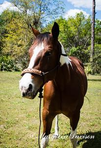 horsesofwedgfield-0686