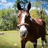 horsesofwedgfield-0690