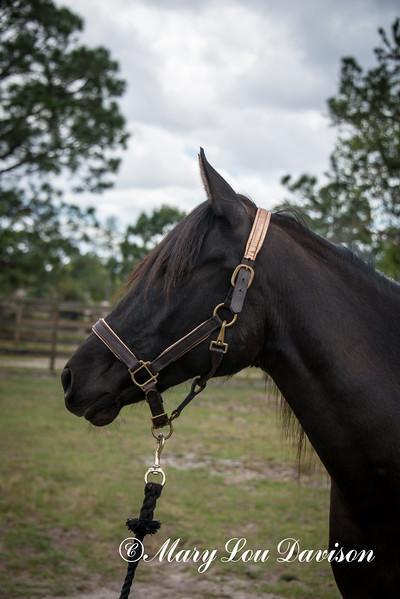 horsesofwedgfield-0994