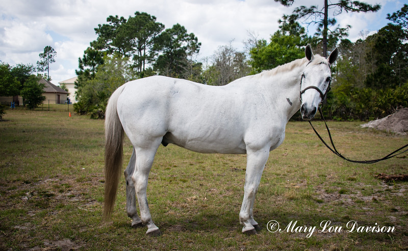 horsesofwedgfield-0922