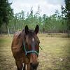 horsesofwedgfield-1151