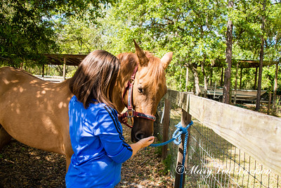 horsesofwedgfield-0675