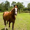 horsesofwedgefield-2036