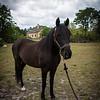horsesofwedgfield-0983