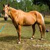 horsesofwedgfield-1215