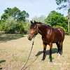 horsesofwedgfield-1074