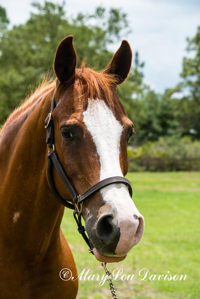 horsesofwedgefield-2049