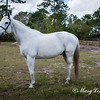 horsesofwedgfield-0916