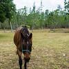 horsesofwedgfield-1150
