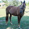 horsesofwedgfield-2219