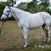 horsesofwedgfield-0917
