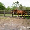 horsesofwedgefield-2156