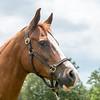 horsesofwedgefield-2052