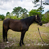 horsesofwedgfield-0984