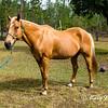 horsesofwedgfield-1214