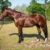 horsesofwedgfield-1028