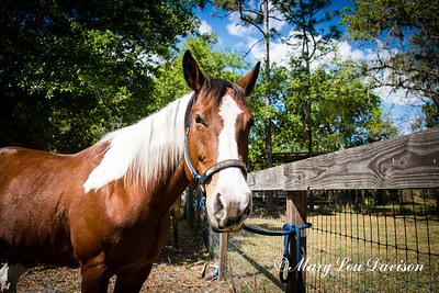 horsesofwedgfield-0677