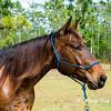 horsesofwedgfield-1281