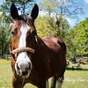 horsesofwedgfield-0689
