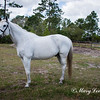 horsesofwedgfield-0914