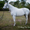 horsesofwedgfield-0915