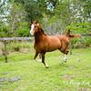 horsesofwedgefield-2136