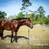 horsesofwedgfield-1043