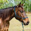 horsesofwedgfield-1280