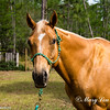 horsesofwedgfield-1220