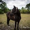 horsesofwedgfield-0979