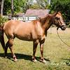 horsesofwedgfield-0768