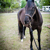 horsesofwedgfield-1009