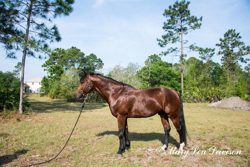 horsesofwedgfield-1030