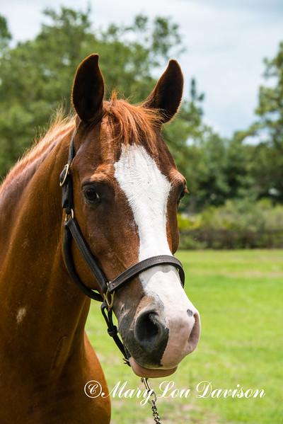horsesofwedgefield-2048