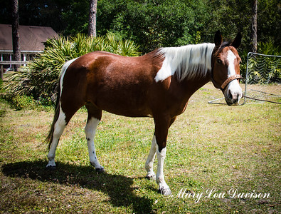 horsesofwedgfield-0679