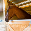 horsesofwedgfield-2172