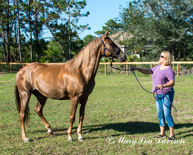 horsesofwedgfield-2211