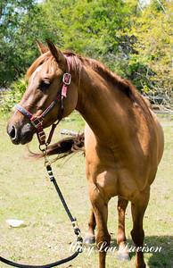 horsesofwedgfield-0747