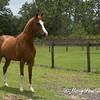 horsesofwedgefield-2065