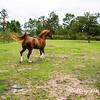 horsesofwedgefield-2109