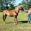 horsesofwedgfield-2214