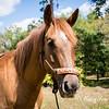 horsesofwedgfield-0774