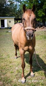 horsesofwedgfield-0758