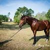 horsesofwedgfield-1062