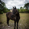 horsesofwedgfield-0980