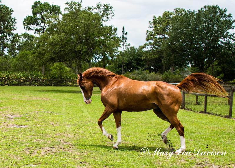 horsesofwedgefield-2071